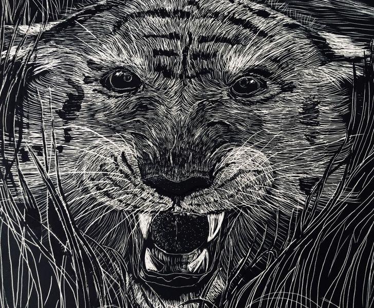 Tigerkopf, Scratchboard, Wilde tiere, Tiger, Zeichnungen, Gras