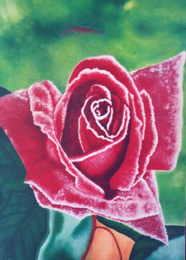 rose und frost malerei frost rose von danro on kunstnet. Black Bedroom Furniture Sets. Home Design Ideas