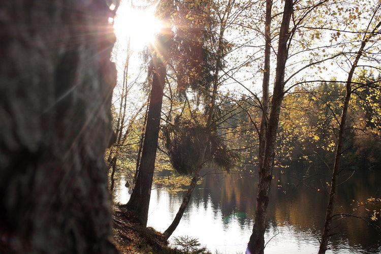 Landschaft, Harz, Silberteich, Sonnenstrahlen, Goldener oktober, Landschaftsfotografie