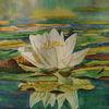 Teich, Weiß, Seerosen, Aquarell