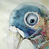 Schnabel, Taube, Vogel, Augen
