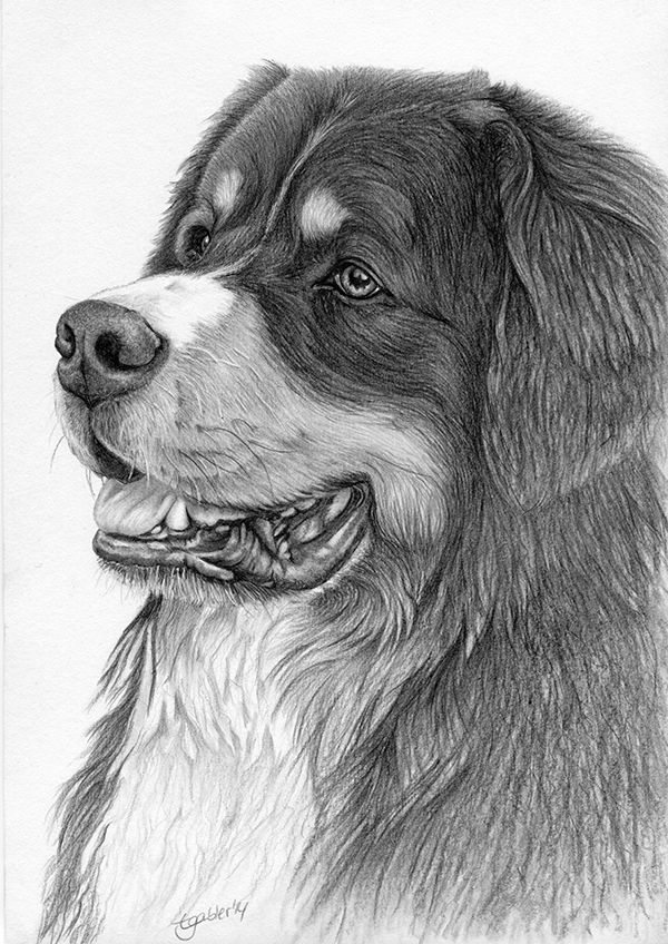Dog Pencil Sketches Pictures