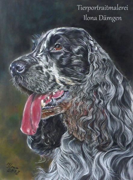 Tierportrait, Portrait, Hund, Pastellmalerei, Cocker spaniel, Cockerspaniel