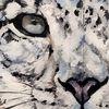 Schnee, Schneeleopard, Wildtier, Malerei