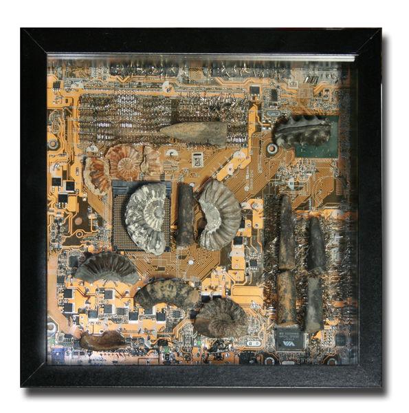 Belemniten, Mainboard, Ammonit, Plastik, Fossilien