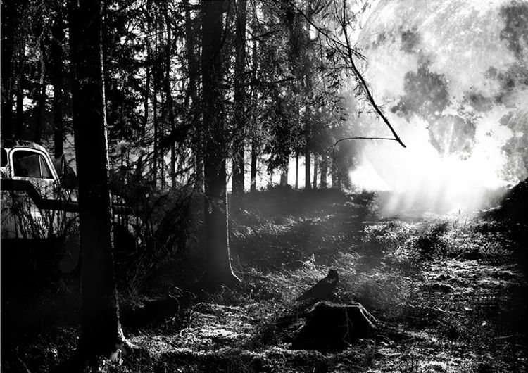 Fotografie, Auto, Fahrzeug, Digitalartwork, Licht, Wald