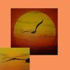 Vogel, Landschaft, Sommer, Abstrakt