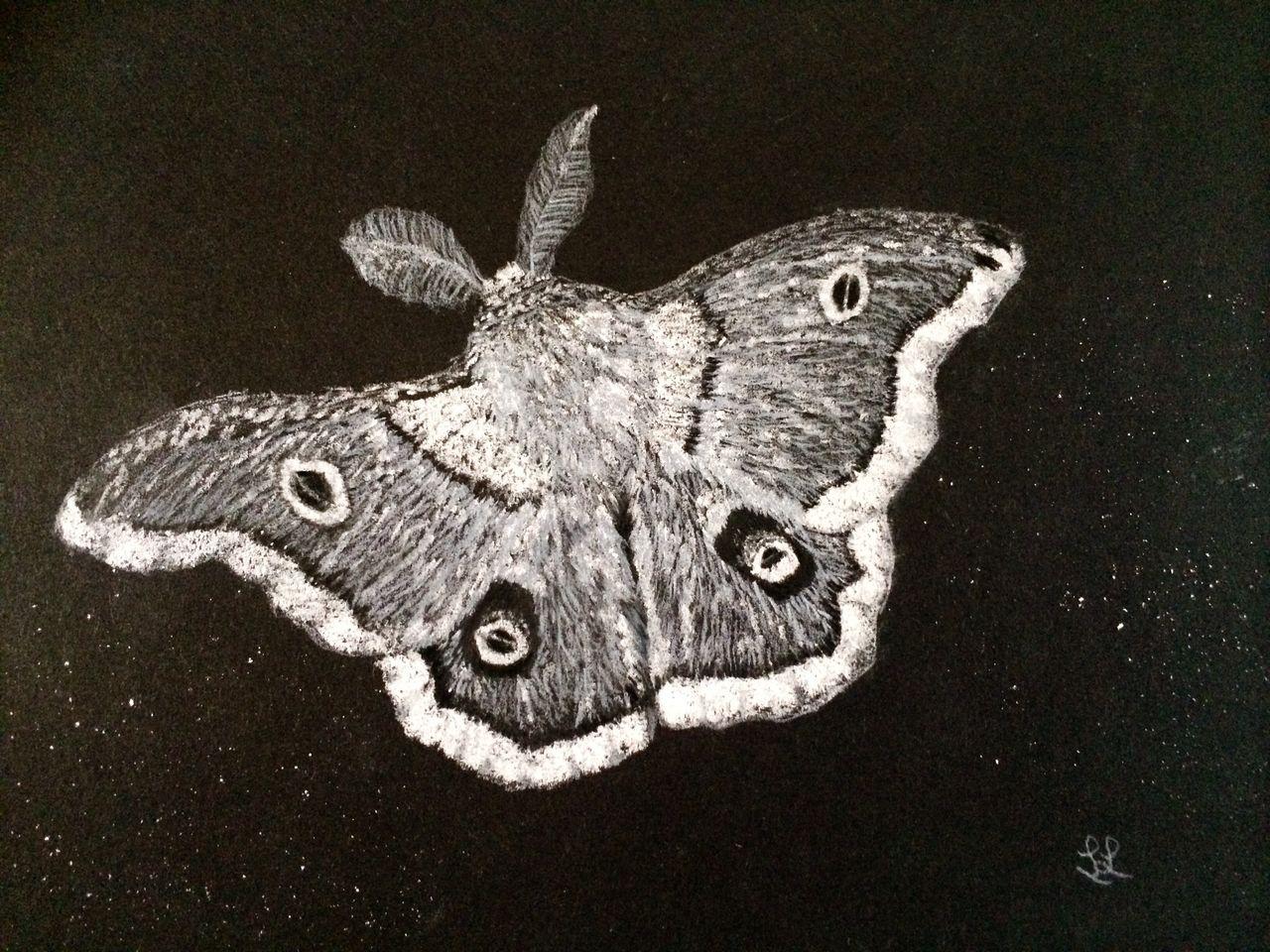 bild motte zeichenkohle natur zeichnung von elefantenfuss bei kunstnet. Black Bedroom Furniture Sets. Home Design Ideas