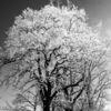Winter ist´s, Kalt ii, Und bitter, Fotografie
