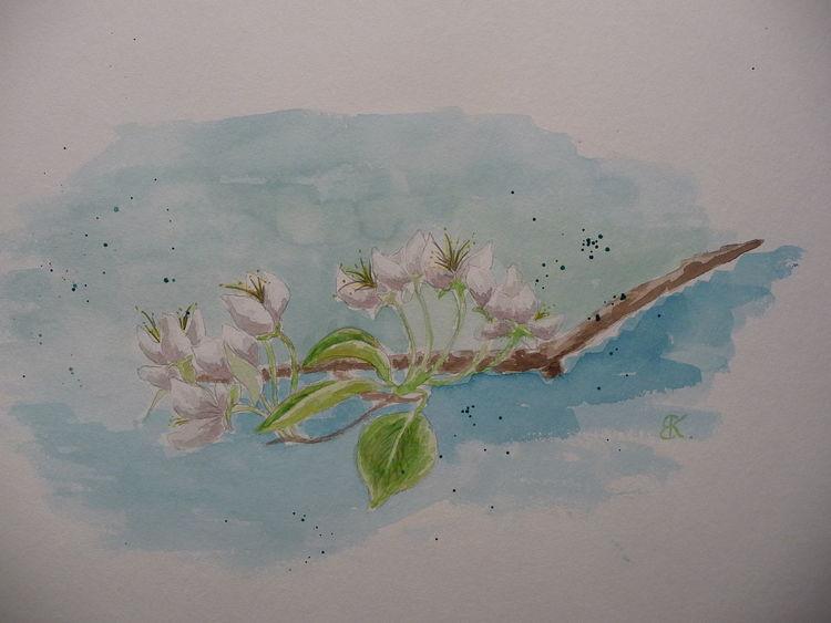 Birne, Blüte, Weiß, Aquarell