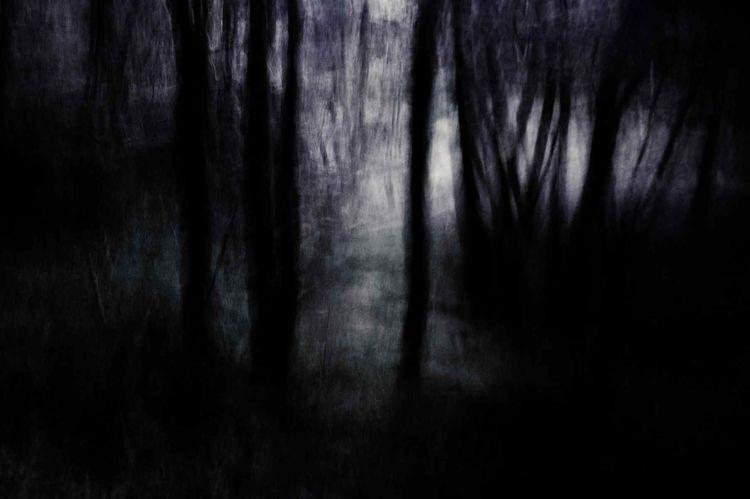 Landschaft, Konzept, Licht, Dunkel, Wald, Fotografie