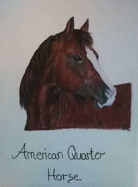 Pferde, Pastellmalerei, Zeichnungen