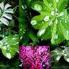 Pflanzen, Fotografie, Regen, Natur