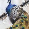 Vogel, Pfau, Aquarellmalerei, Tiere