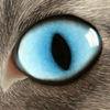 Katze, Blau, Pastellmalerei, Kreide