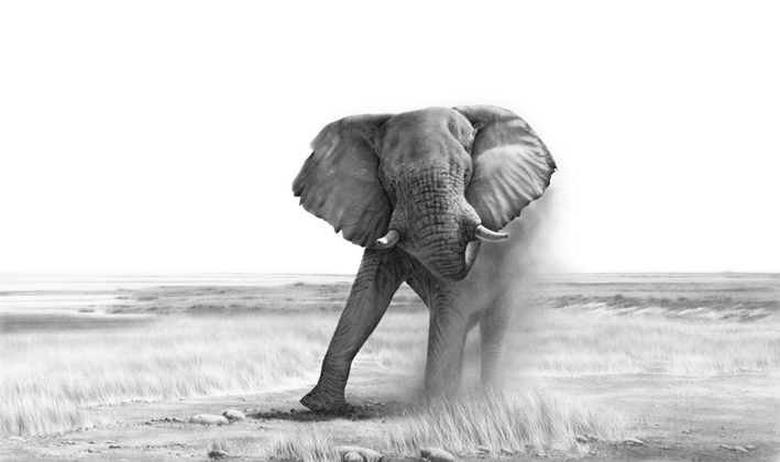 Figural, Bleistiftzeichnung, Tiere, Zeichnung, Gigant, Afrika