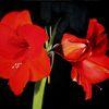 Fotorealistische malerei, Blumen, Malerei,