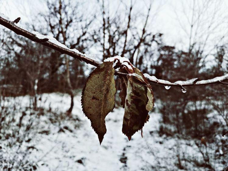 Schnee, Natur, Blätter, Fotografie