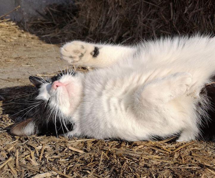 Katze, Leben, Tiere, Sonne, Fotografie