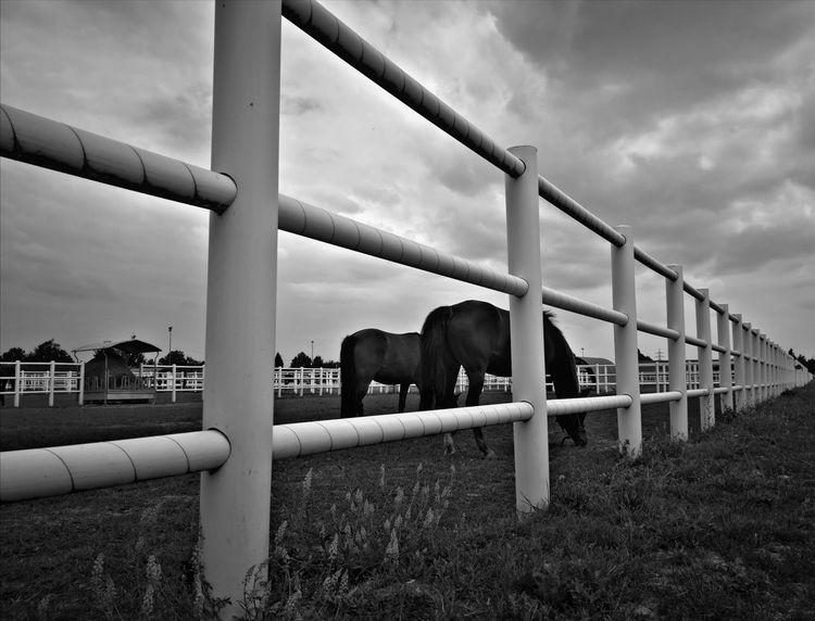 Natur, Landschaft, Tiere, Pferde, Fotografie