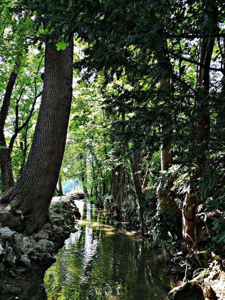 Fluss, Pflanzen, Natur, Fotografie