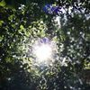 Natur, Baum, Wald, Fotografie