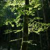 Natur, Liebe, Wald, Baum