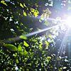 Natur, Leben, Wald, Fotografie