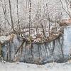 Baum, Bach, Erfurt, Winter