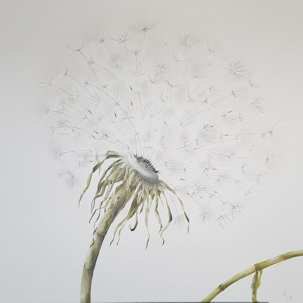 Natur, Pflanzen, Pusteblumen, Ölmalerei auf leinwand, Malerei,