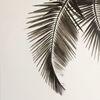 Ölmalerei, Schwarz weiß, Palmblätter, Schnitt