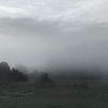 Nebel, Baum, Wolken, Feld