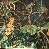 Pflanzen, Erde, Brunnenkresse, Malerei