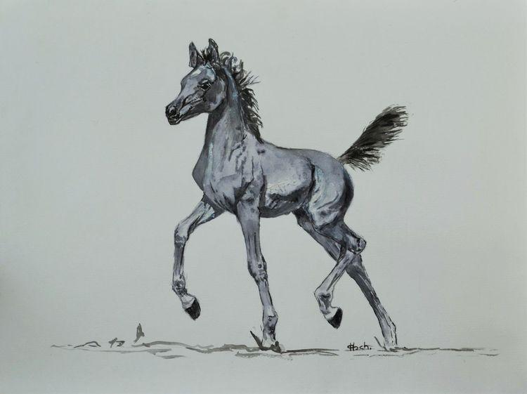 Trab, Pferde, Fohlen, Araber, Aquarell