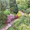 Landschaft, Rhododendron, Baum, Park