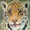 Tiere, Portrait, Jaguar, Zeichnungen