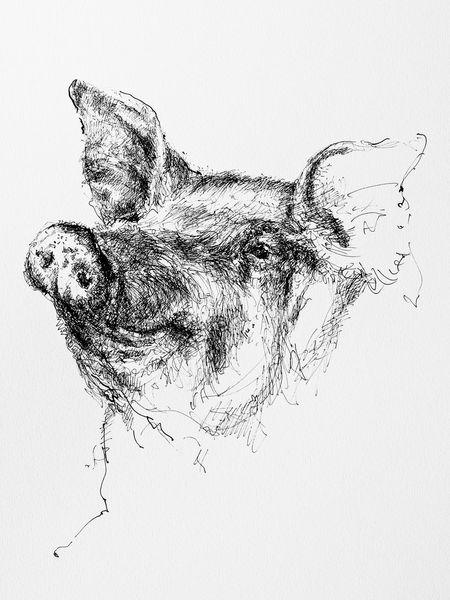 Tuschezeichnung, Portrait, Schwein, Tiere, Natur, Zeichnungen