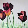 Tulpen, Narure, Blumen, Natur
