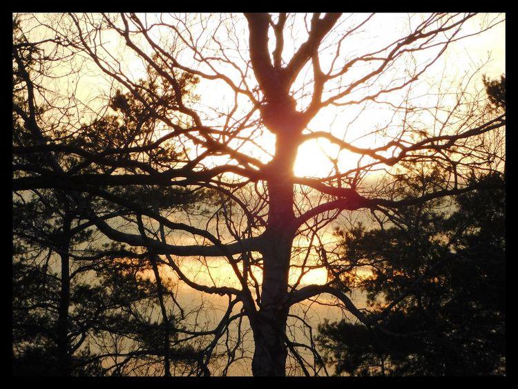 Baum, Erwachen, Äste, Nachmittag, Licht, Fotografie