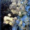 Pflanzen, November, Efeu, Fotografie