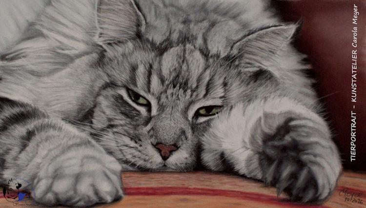 Zeichnung, Lieblingstier, Portrait, Katze, Pastellmalerei, Perserkatze