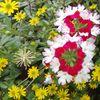 Gelb, Blüte, Grün, Rosa