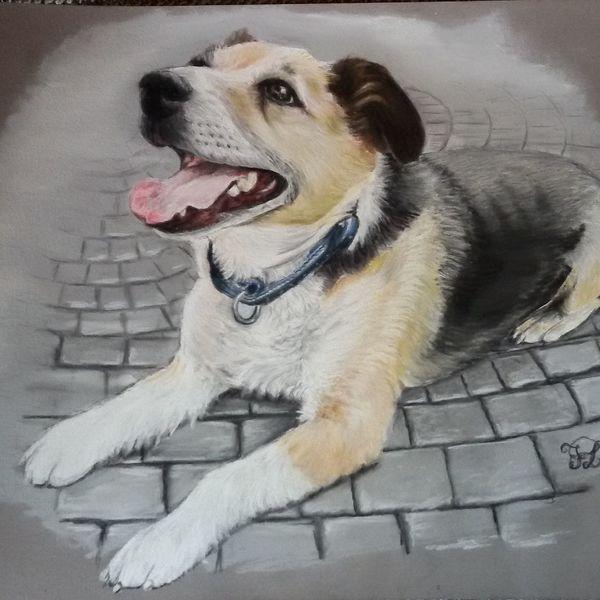 Portrait, Hund, Pastellmalerei, Tierportrait, Zeichnungen