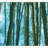 Baum, Ruhe, Fotografie, Wasser