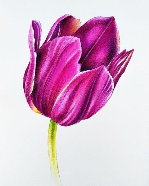 Aquarellmalerei, Botanik, Blumen, Aquarell,