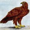 Vogel, Spirituell, Greifvogel, Natur