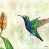 Vogel, Leichtigkeit, Bunt, Kolibri