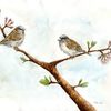 Frühlingsboten, Singvogel, Kirschblüte, Spatz