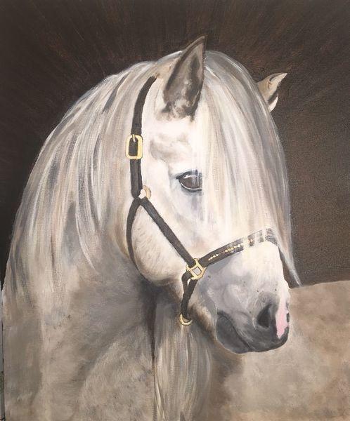 Pferde, Tiere, Pferdekopf, Portrait, Weiß, Malerei