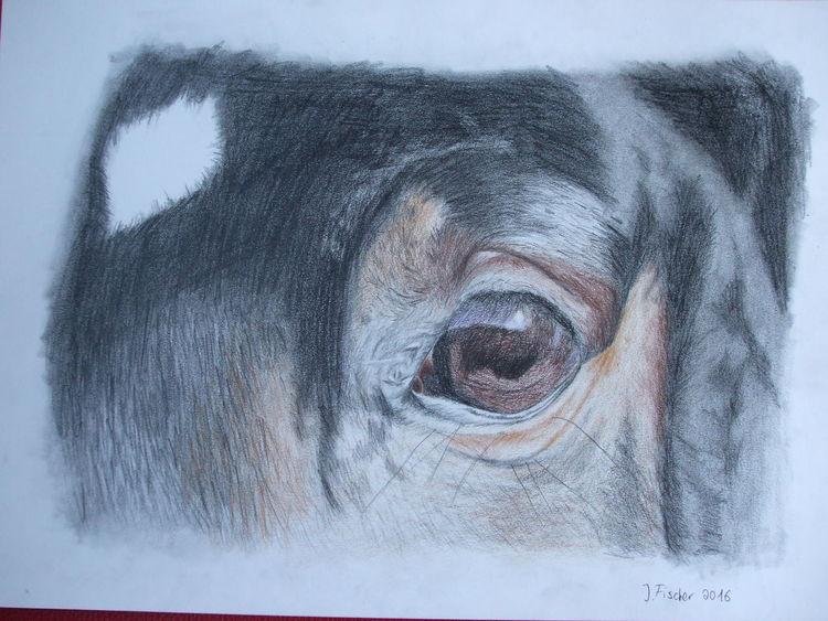 Pferde, Zeichnung, Buntstiftzeichnung, Zeichnungen
